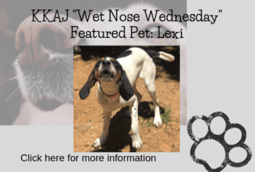 Wetnose Wednesday