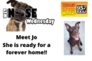 Wetnose Wednesday